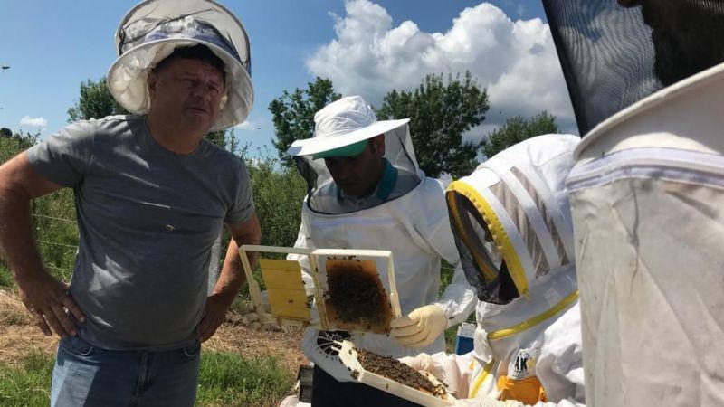 Ana arı üretimini öğrendiler