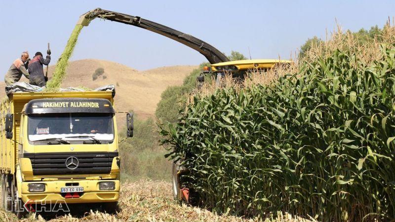 Silajlık mısır üretiminde Sakarya listede