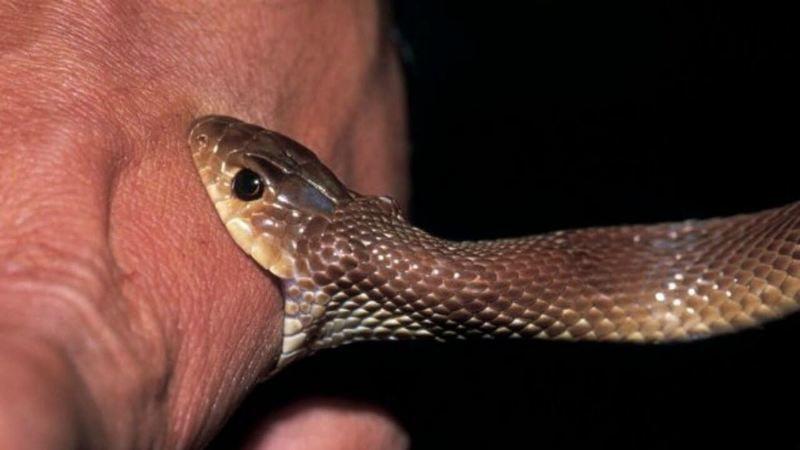 Fındık toplarken yılan soktu