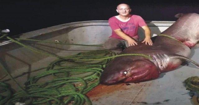 Balıkçı Ağında Köpek Balığı
