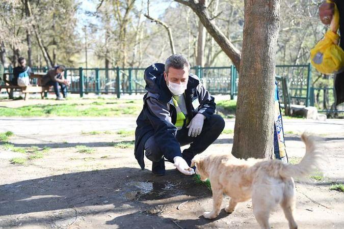 Balıkesir Büyükşehir sokak hayvanları için mama dağıtıyor