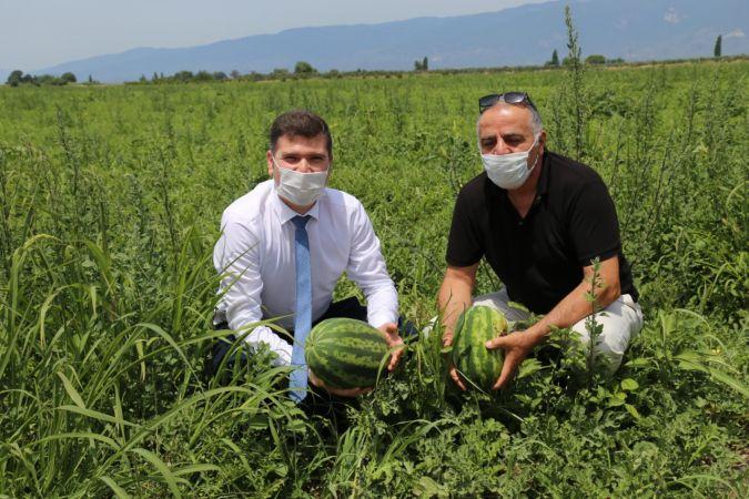 Edremit'te 25 yıl sonra elde edilen hasat, Adana Karpuzuna rakip oldu