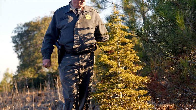 Orman Genel Müdürlüğü geçici işçi alacak