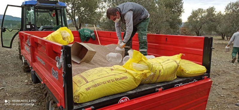 Ayvalık Belediyesi zeytinliklerinde hedef rekolteyi ikiye katlamak