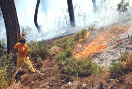 10 dönüm orman yandı
