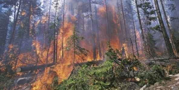 Serviste çıkan yangın ormana sıçradı