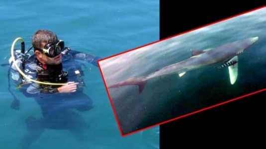 Dalgıcın köpekbalığı paniği
