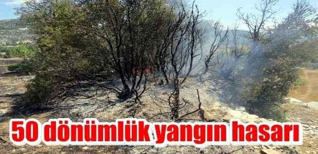 50 dönüm yangın hasarı