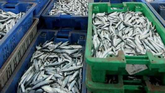 Bu balıkları sakın satın almayın