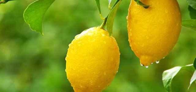 Zam lideri yine limon