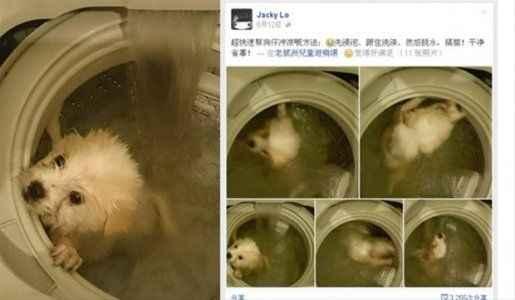 Köpeği çamaşır makinesine attı