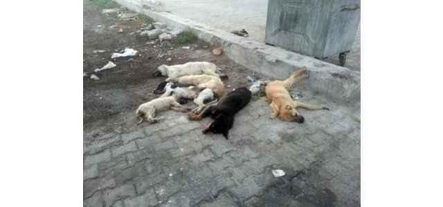 Vatandaşlardan köpek katliamına tepki