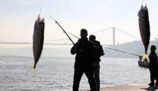 Acemi balıkçı oltaya kendi düştü