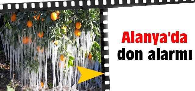 Alanya'da don alarmı