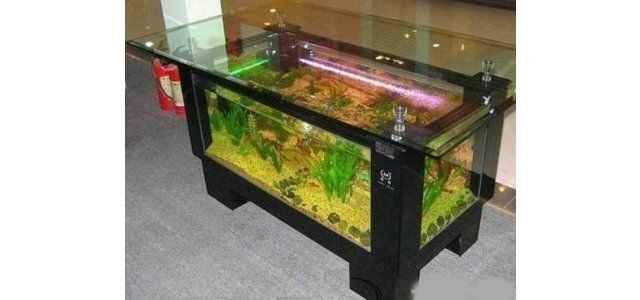 Canı balık isteyince..