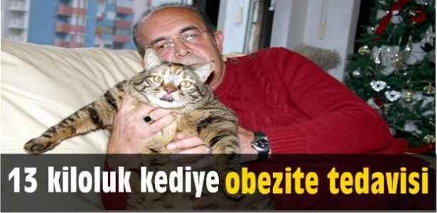 13 kiloluk kediye obezite tedavisi
