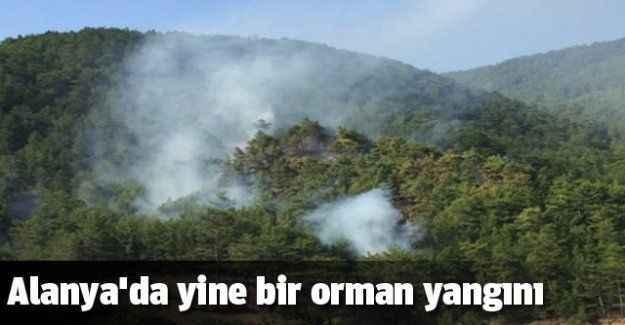 Alanya'da yine bir orman yangını
