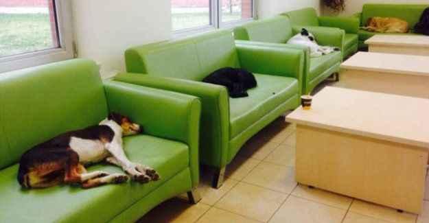 Her köpeğe bir kanepe