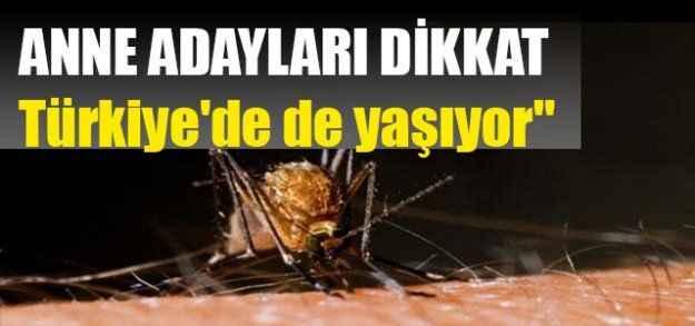"""""""Virüs taşıyan sinekler Türkiye'de de yaşıyor"""""""