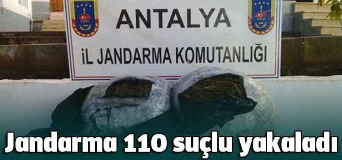 Jandarma 110 suçlu yakaladı