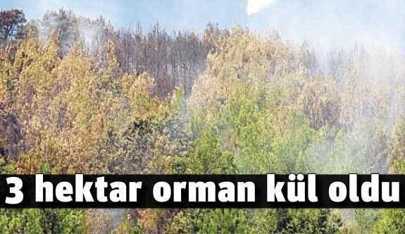 3 hektar orman kül oldu