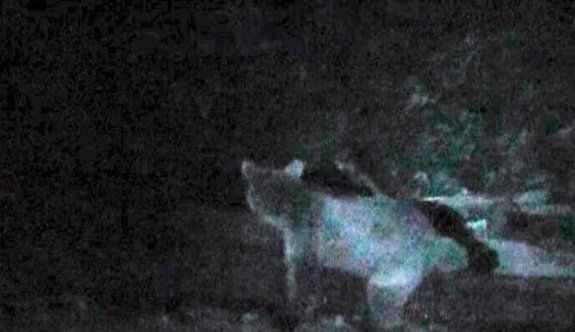 Alabalık tesisine giren ayı turistleri korkuttu