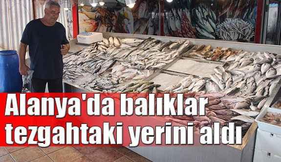 Alanya'da balıklar tezgahtaki yerini aldı
