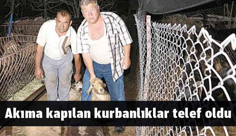 Antalya'da akıma kapılan kurbanlıklar telef oldu