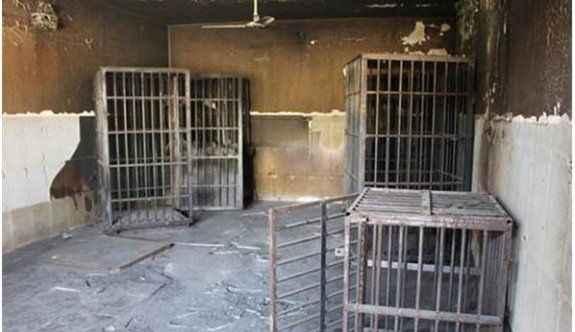 IŞİD mahkumları bu kafeslere kapatmış