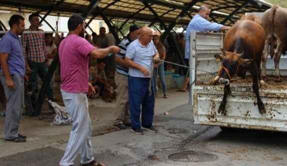 Hayvanların eziyet görmesine vatandaştan tepki