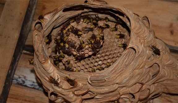 Katil arılardan Türkiye'de bir ilk