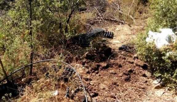 Ormanlık alanda 515 kök hintkeneveri ile geçirildi