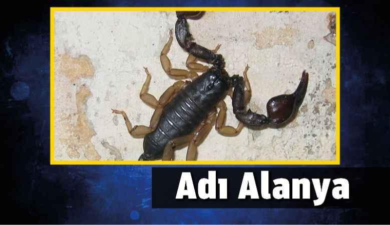 Yeni keşfedilen Akrep türüne Alanya adı verildi