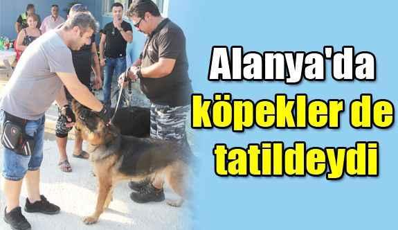 Alanya'da köpekler de tatildeydi