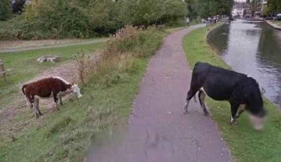 Google ineklerin kafasını buzladı