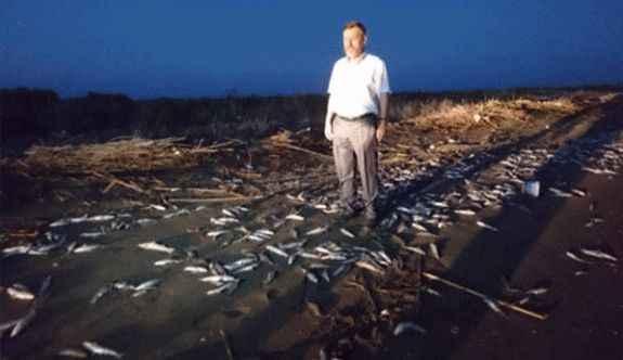 Balıklar sahile vurdu!