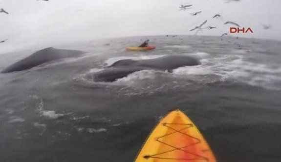 Bir anda dev balinaların arasında kaldılar