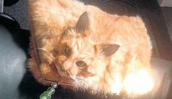 Ölmüş kediden çanta yaptılar!