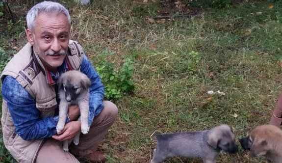 Yavru köpeklere öğretmen sahip çıktı