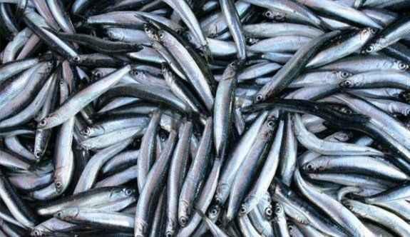 Balıktaki artış fiyatlara yansıdı