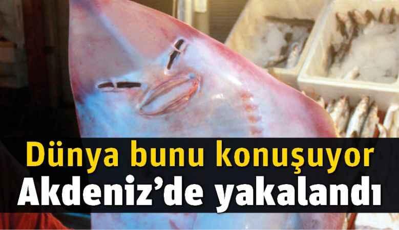 Bu balık Akdeniz'de yakalandı