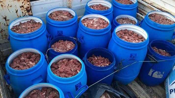Satışa hazır 5 ton domuz eti ele geçti