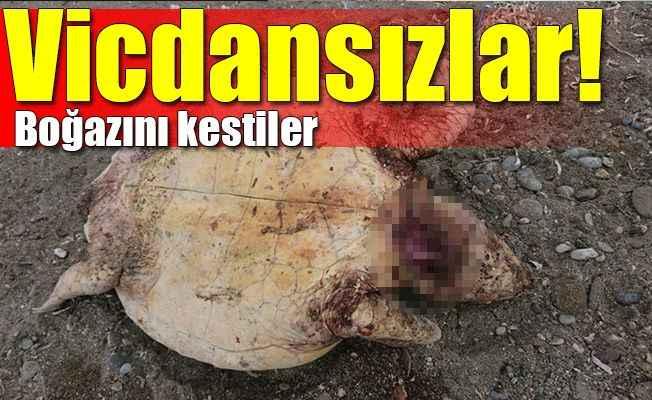 Alanya'da Caretta katliamı