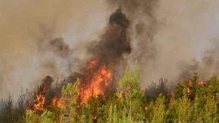 Yangın söndürülemiyor! 800 hektar orman kül oldu