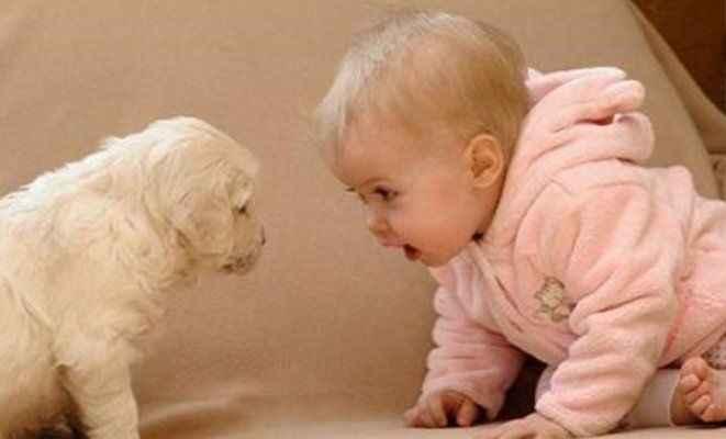 Evcil hayvan beslemek çocuklar için iyi değil!