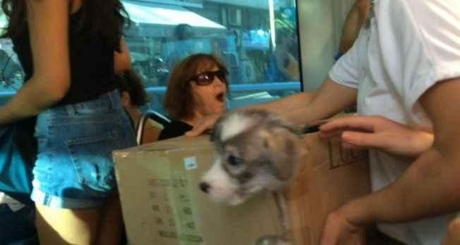 Antalya'da tramvaydaki sevimli kaçak yolcu