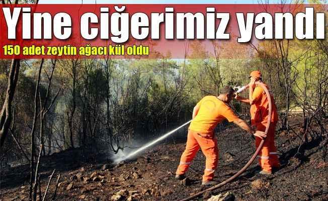 Antalya'a orman yangını