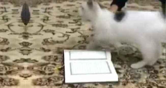 Gören inanamıyor! Ne yaparlarsa yapsınlar Kur'an'a basmadı