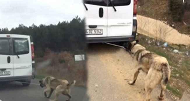 Vicdansız sürücü arabaya bağladığı köpeği yerde metrelerce sürükledi