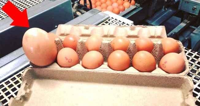 Devasa yumurtanın içinden çıkanlar şoke etti!